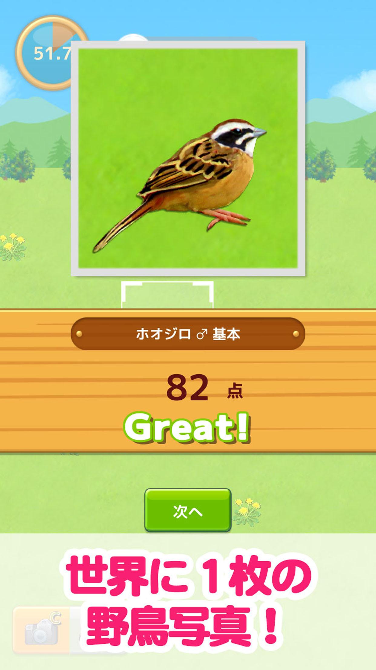 鳥マスター! 野鳥写真