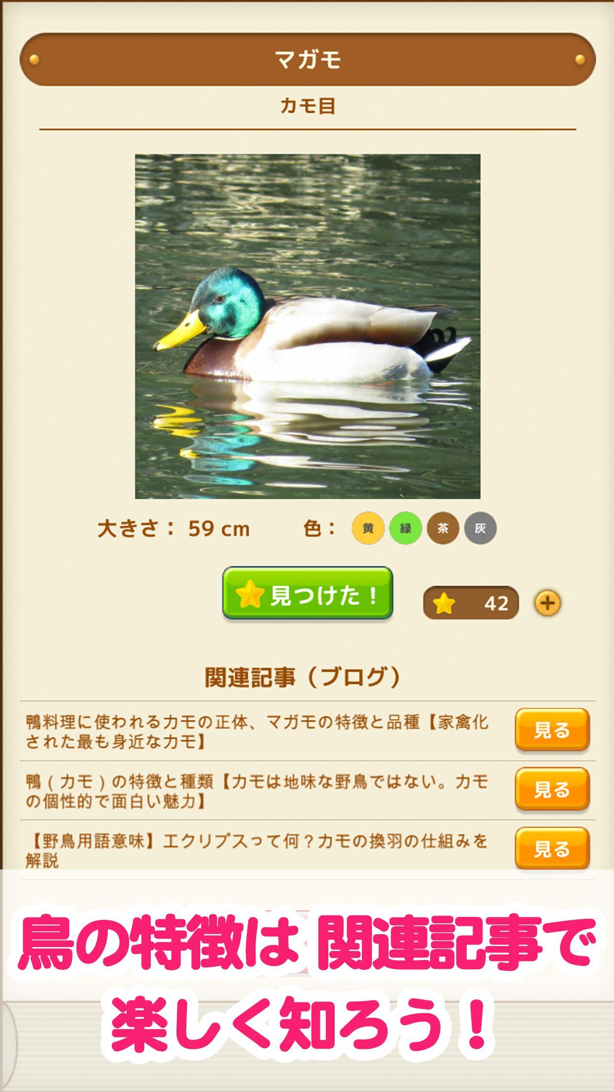見つけた!野鳥図鑑 関連記事