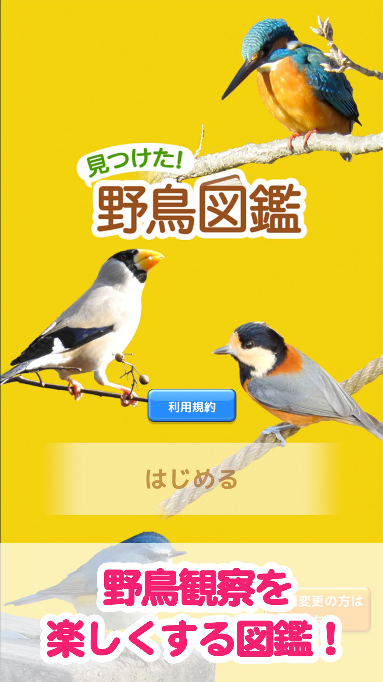 見つけた!野鳥図鑑 TOP