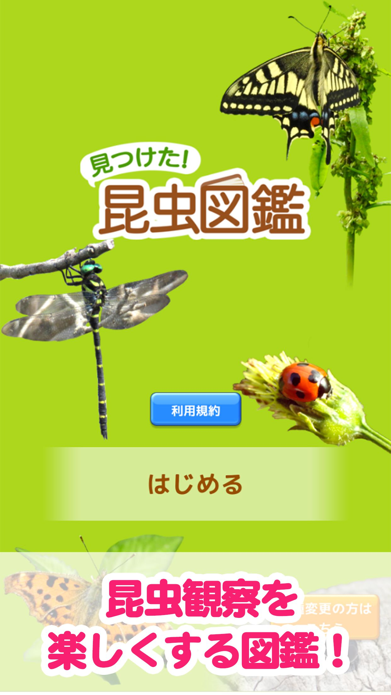 見つけた!昆虫図鑑 TOP